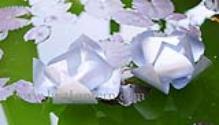 Water Lotus Lanterns