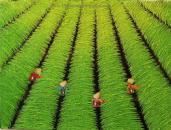 Vietnamese Oil Paintings/Arcrylic Paintings
