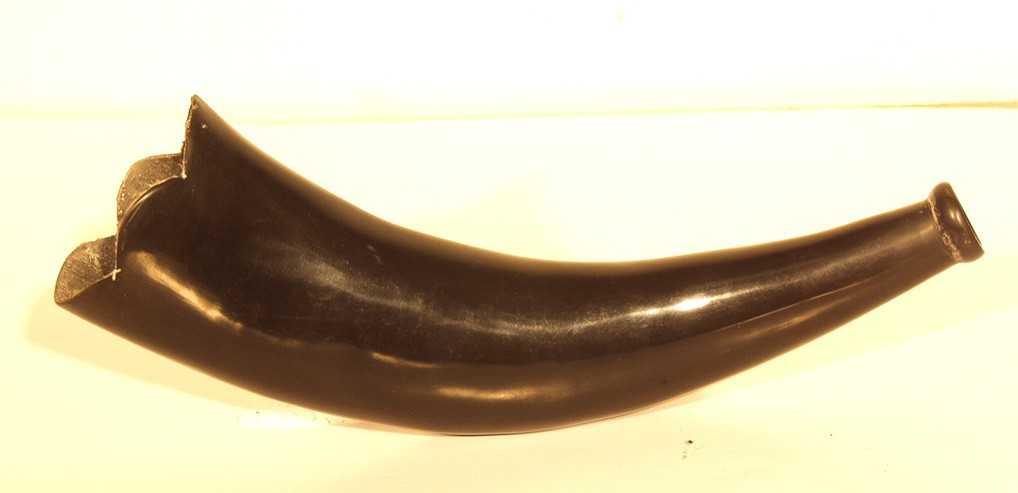Water Buffalo Horn